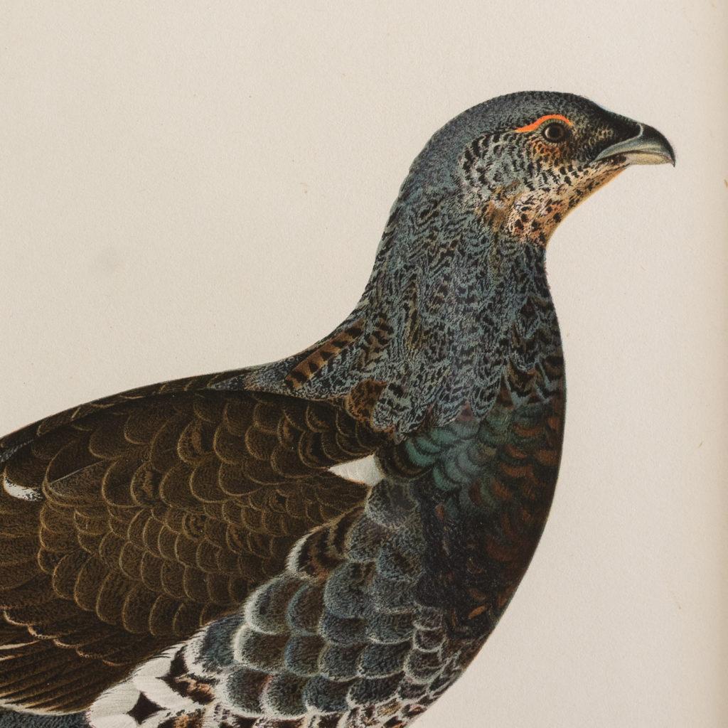 Swedish Birds (Svenska fåglar, efter naturen och på sten ritade)-117298