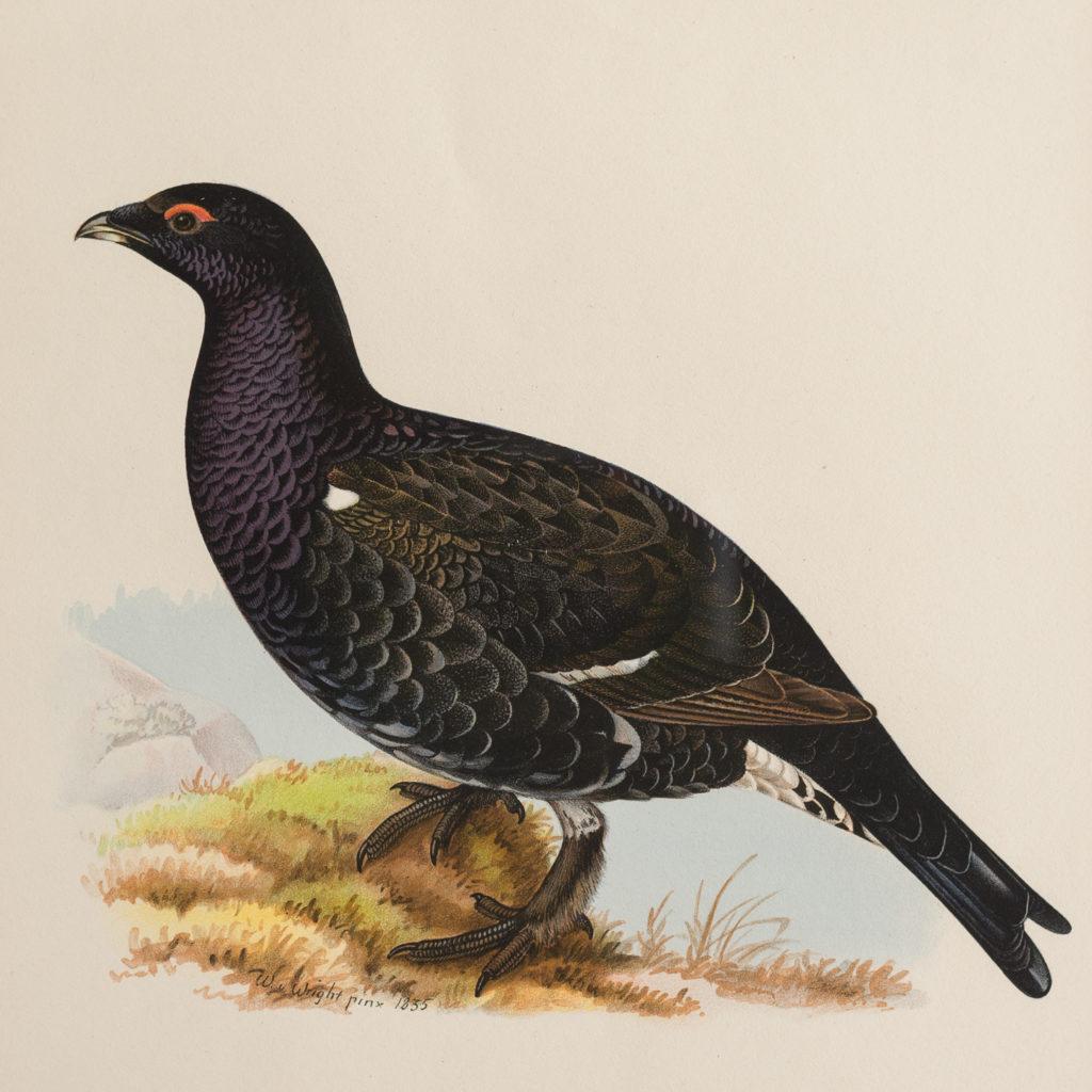 Swedish Birds (Svenska fåglar, efter naturen och på sten ritade)-117263