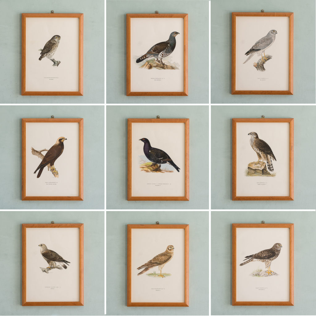 Swedish Birds (Svenska fåglar, efter naturen och på sten ritade)-117278