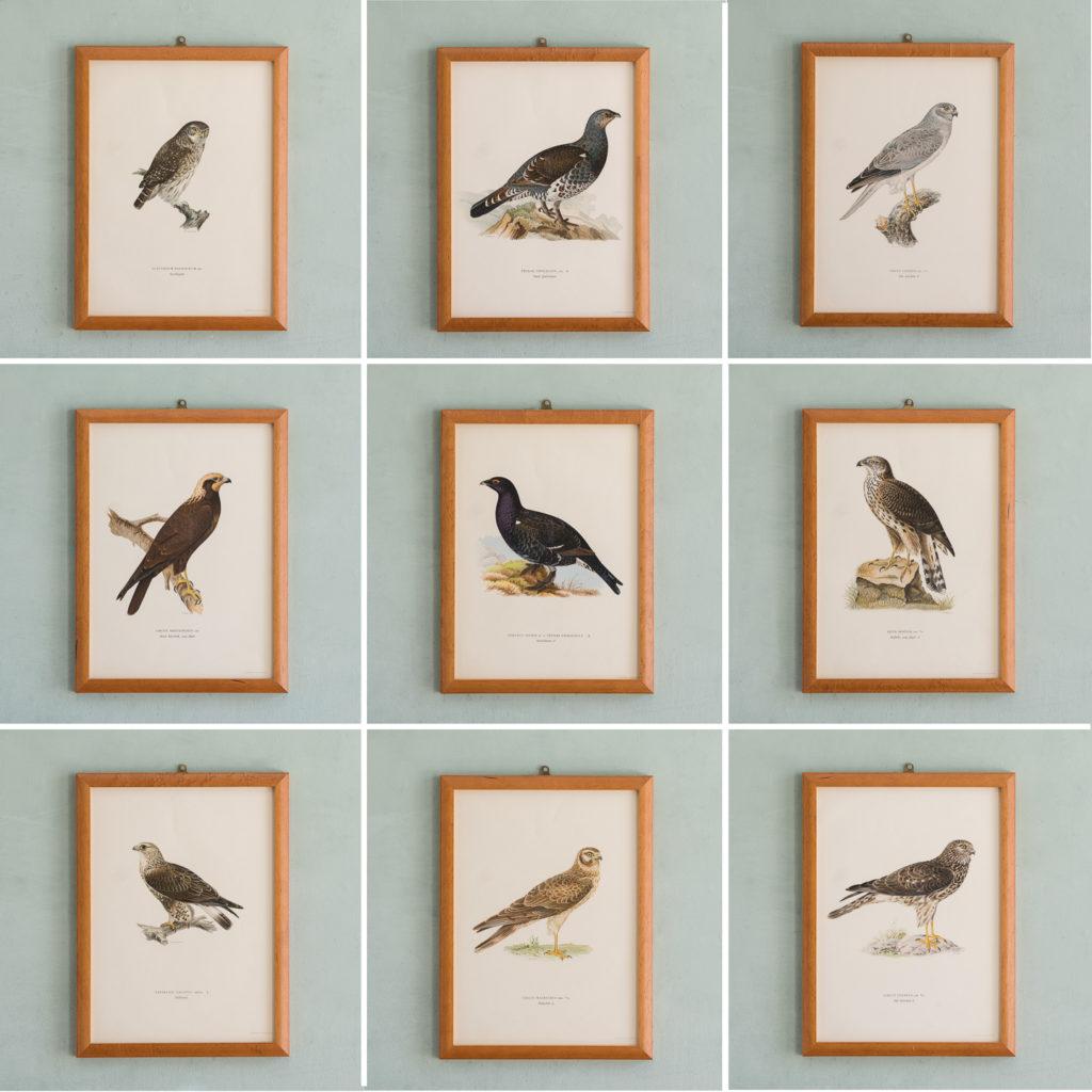 Swedish Birds (Svenska fåglar, efter naturen och på sten ritade)-117290
