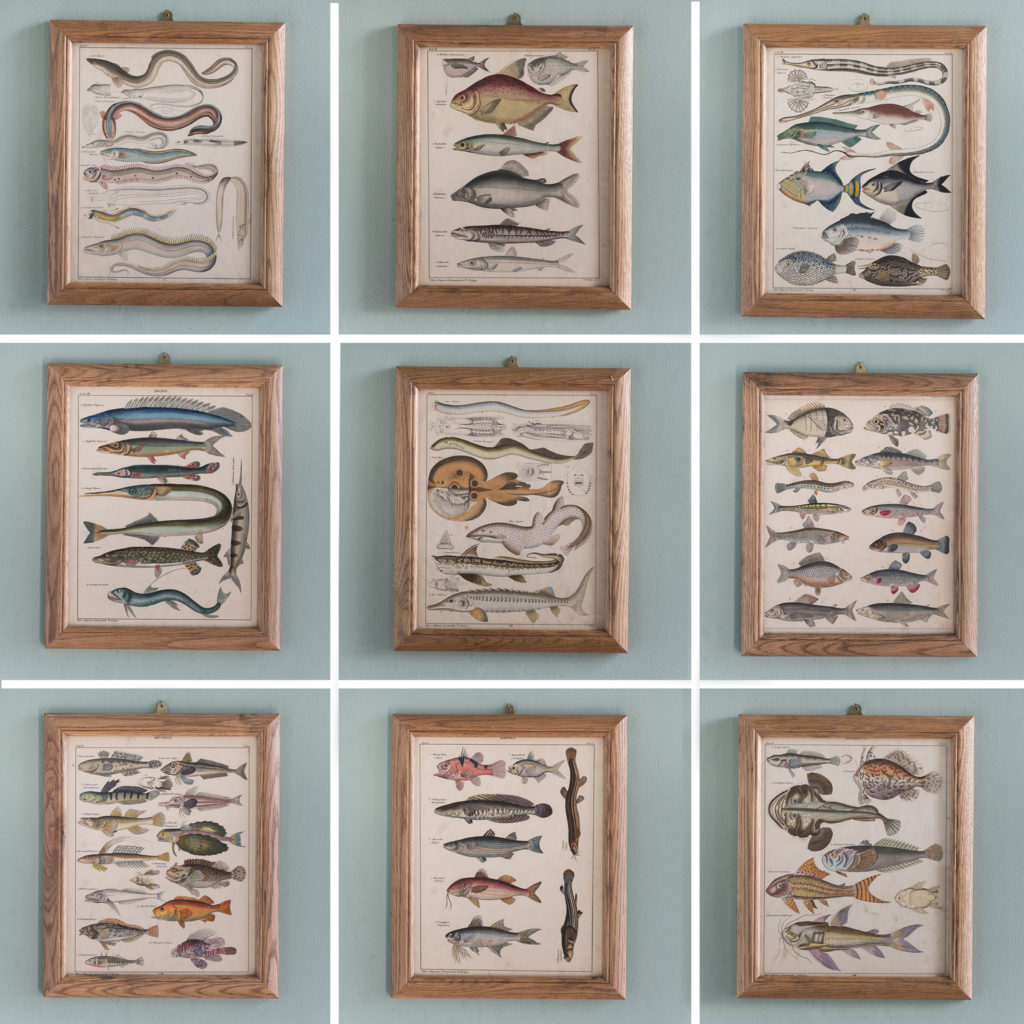 Fish. Hand-coloured steel engravings, based on the work of Lorenz Oken c1835-121261