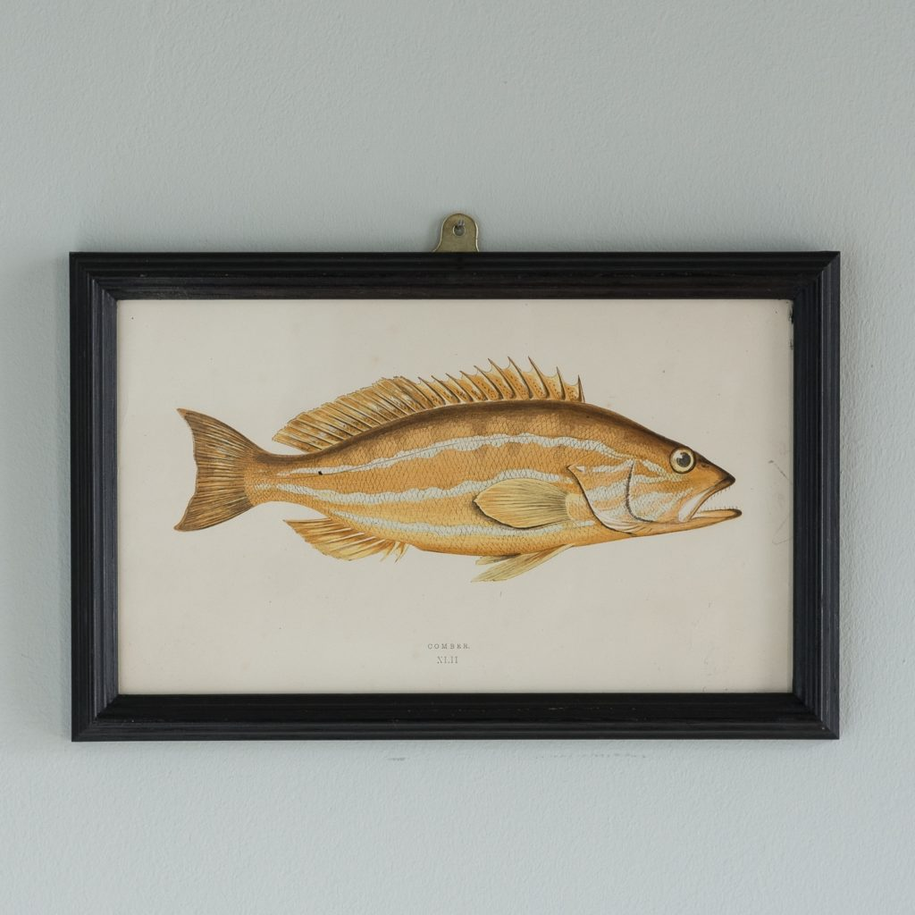 A History of British Fishes based on the drawings of Cornish naturalist; Jonathan Couch