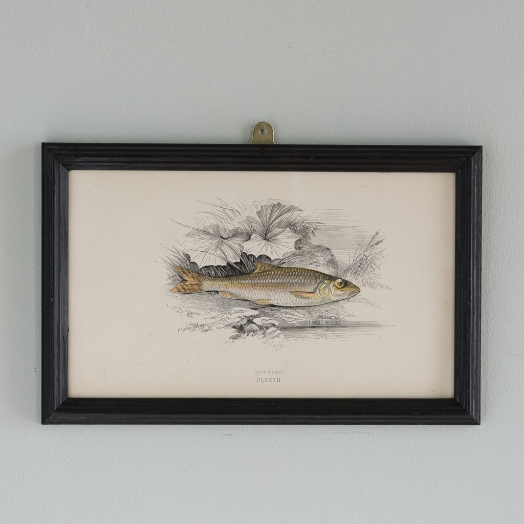 A Gudgeon, based on the drawings of Cornish naturalist; Jonathan Couch