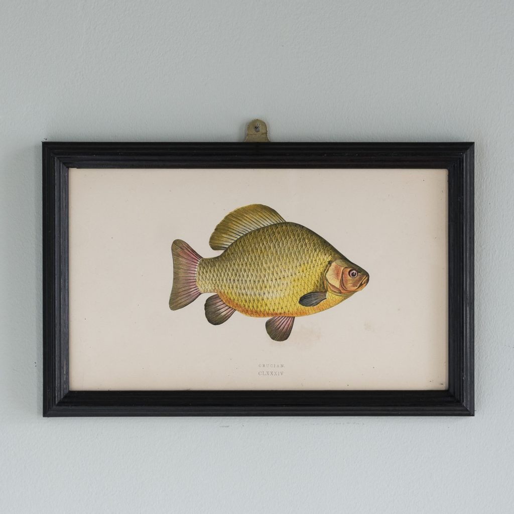 A Crucian, based on the drawings of Cornish naturalist; Jonathan Couch