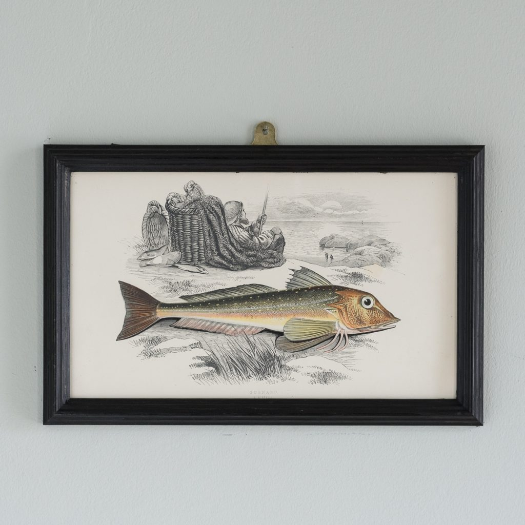 A Gurnard, based on the drawings of Cornish naturalist; Jonathan Couch