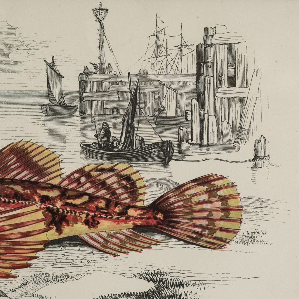 A History of British Fishes c1870-125606