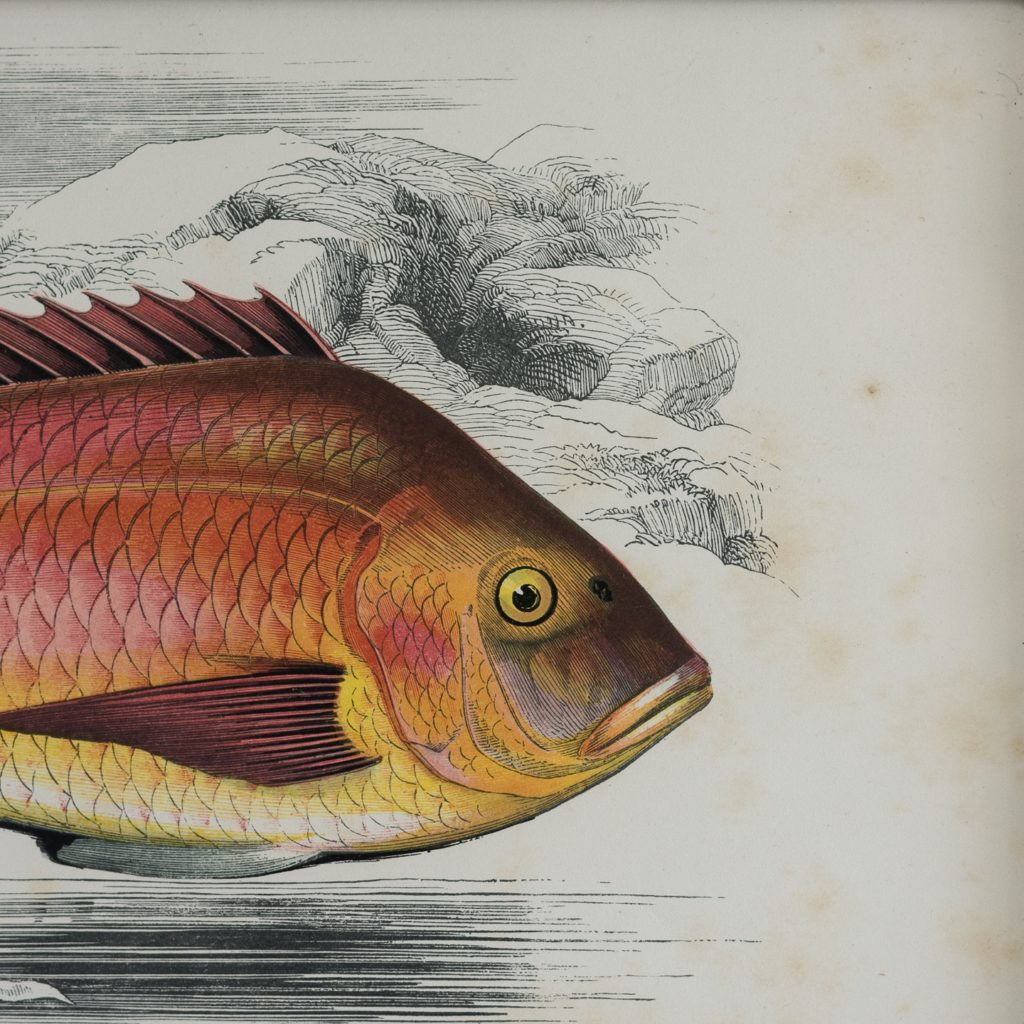 A History of British Fishes c1870-125601
