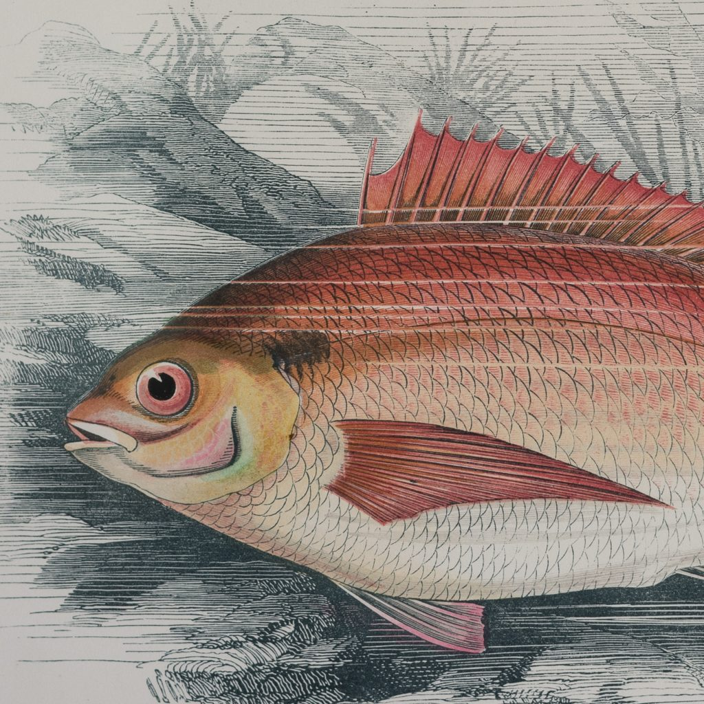 A History of British Fishes c1870-125590