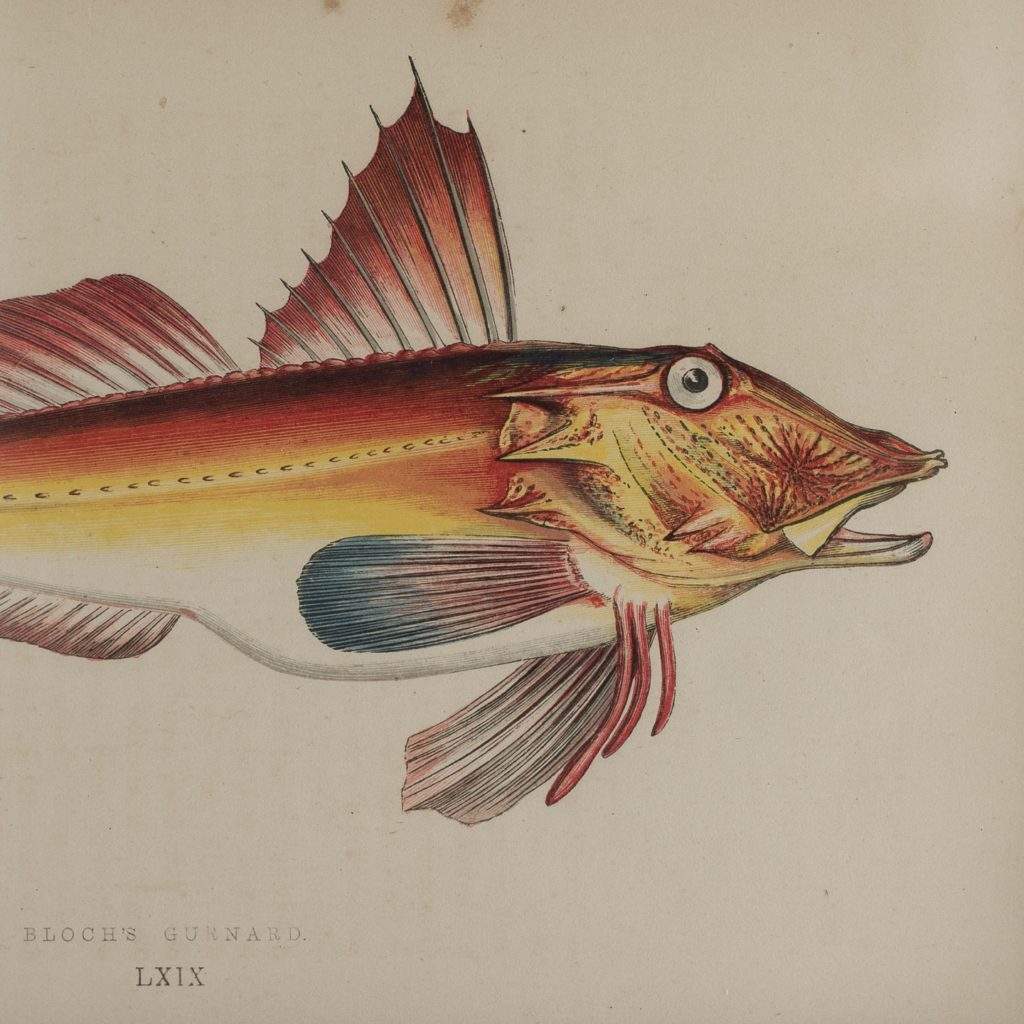 A History of British Fishes c1870-125639