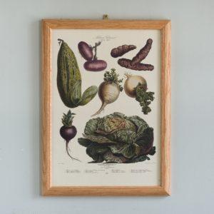 Les Plantes potagères (The Vegetable Garden)-0