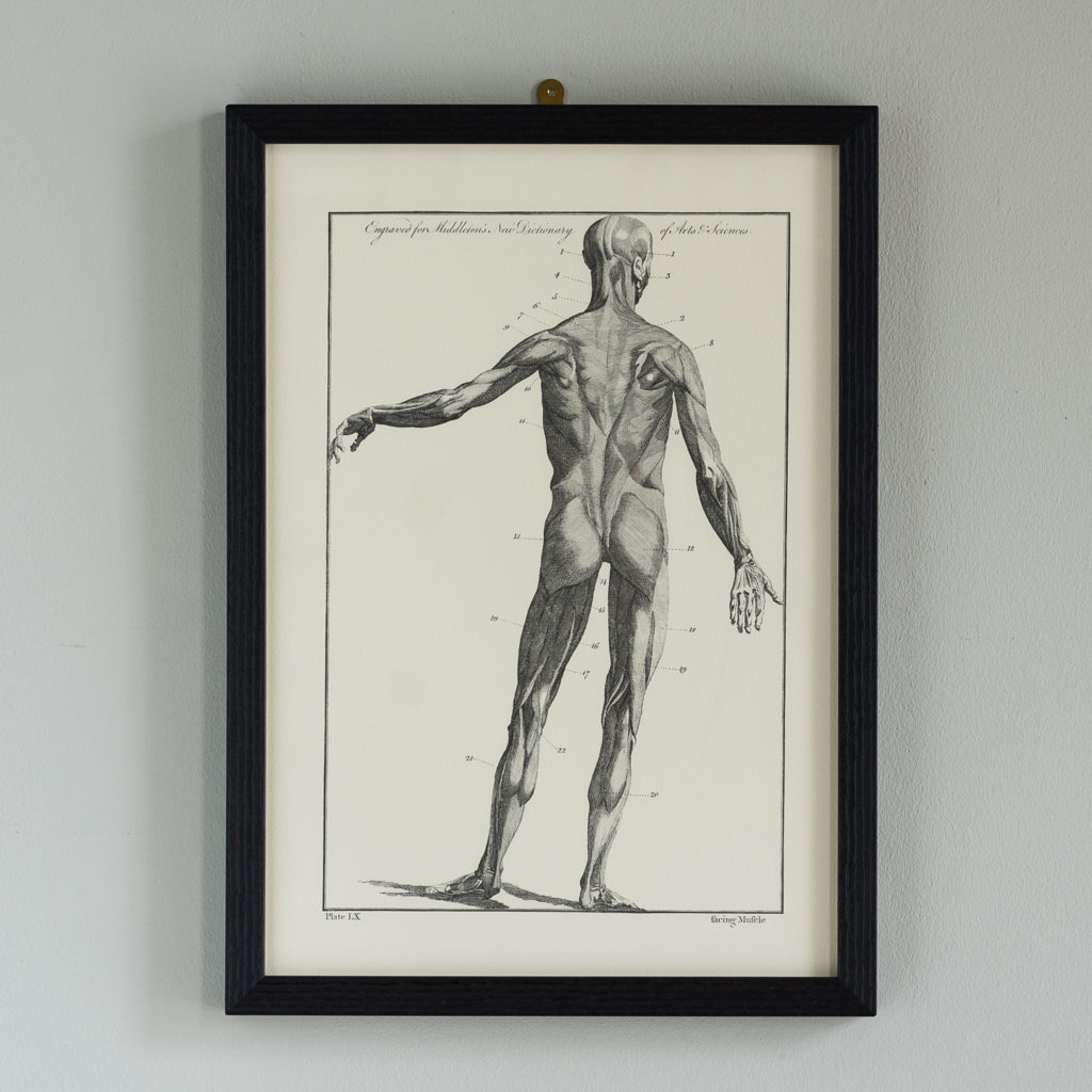 Anatomical prints