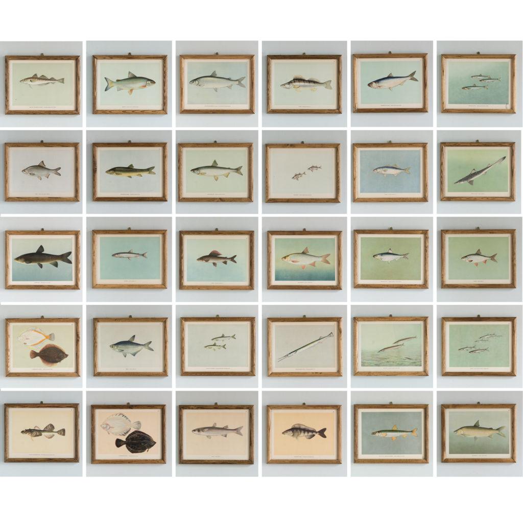 Soviet Era Fish Identification Prints
