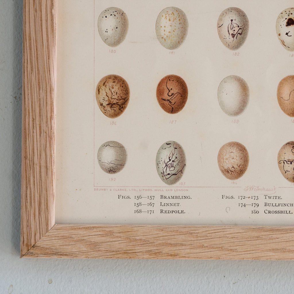Birds Eggs of the British Isles, F.W. Frohawk ,