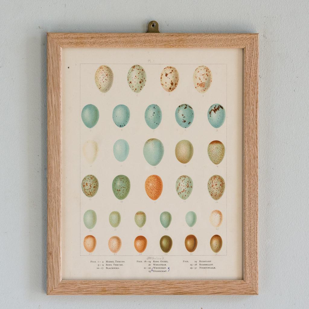 Birds Eggs of the British Isles, F.W. Frohawk ,