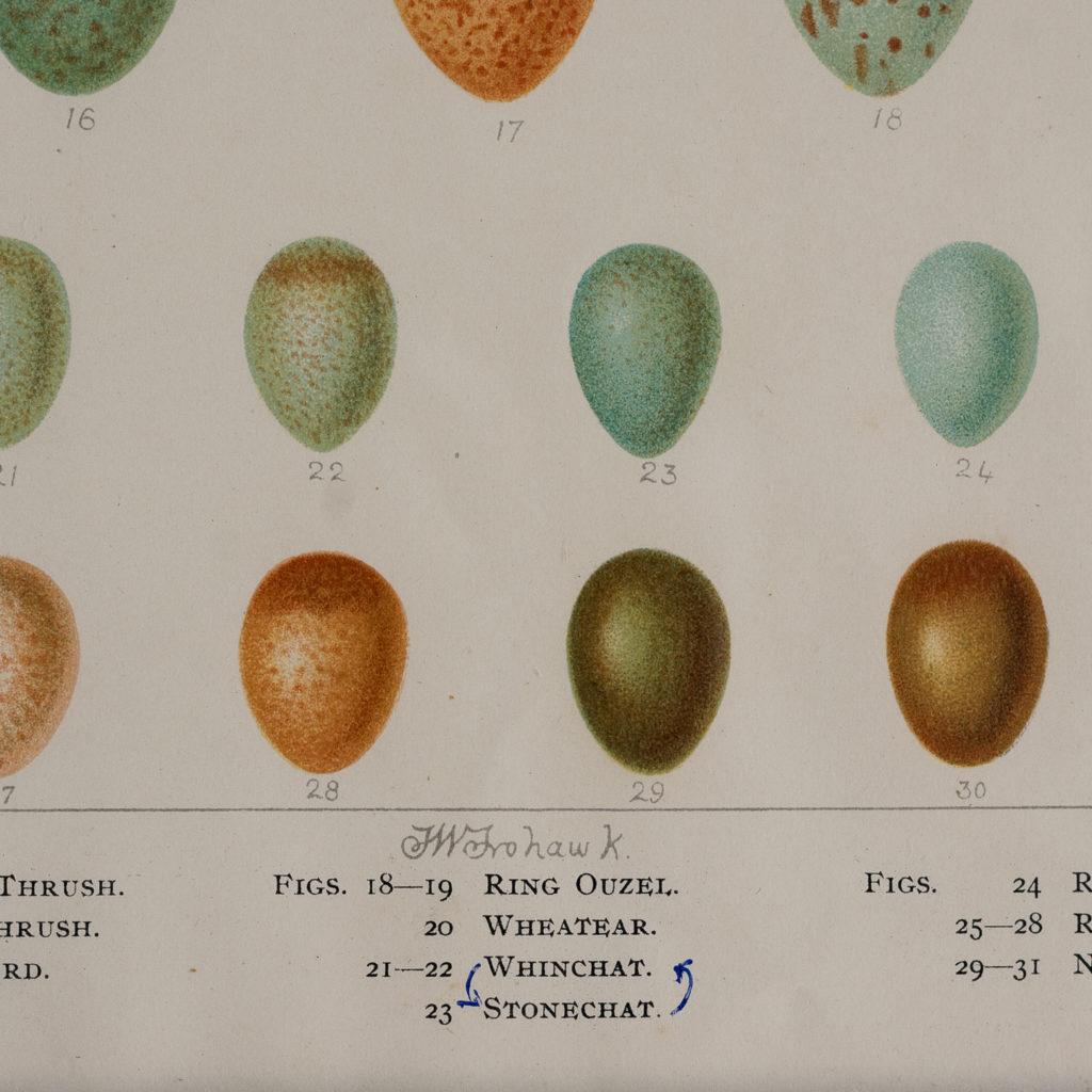 original chromolithographs, by Brumby & Clarke,