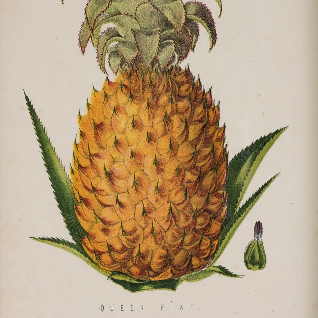 Fruit published by William Mackenzie-129596