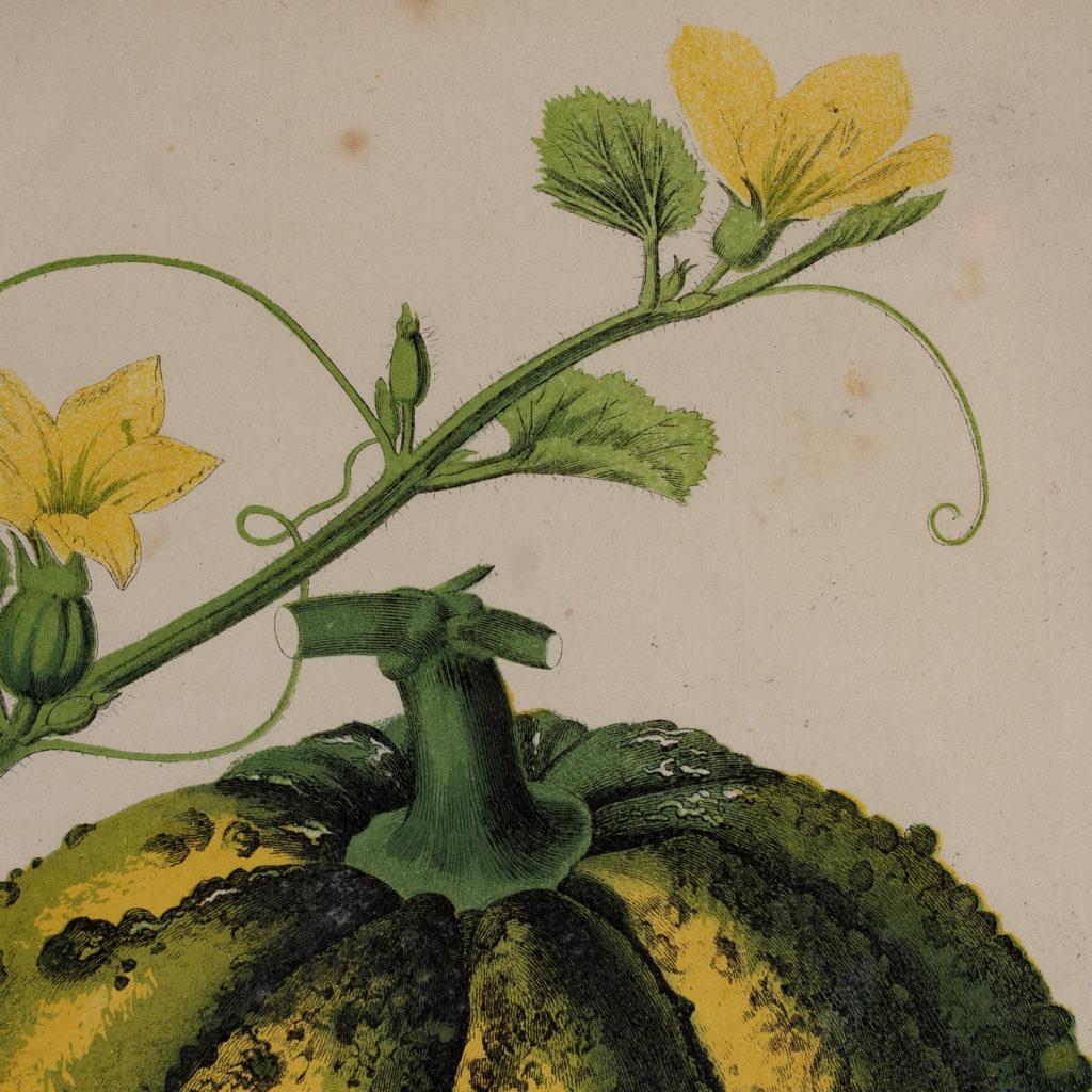 Fruit published by William Mackenzie-129555
