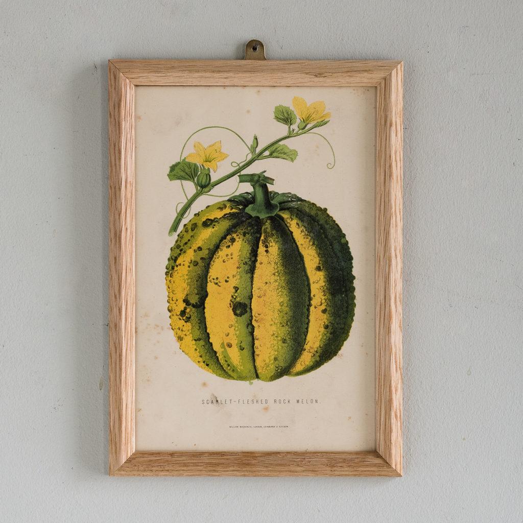 'Scarlet-Fleshed Rock Melon'.