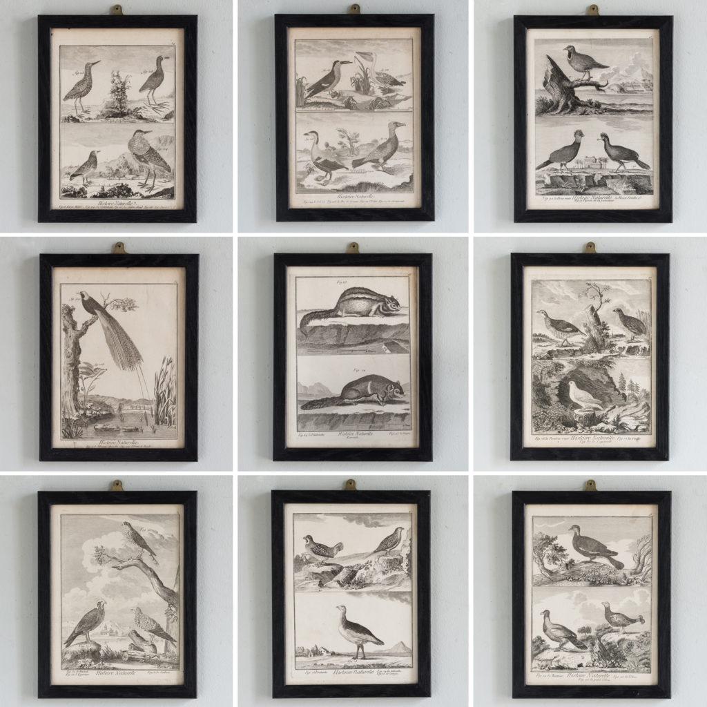 Histoire Naturelle - copper engravings 1777