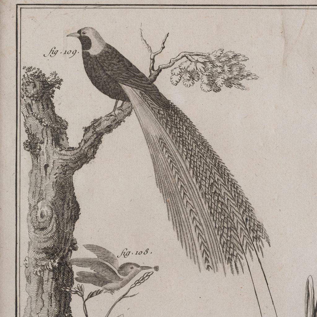 Histoire Naturelle-129219