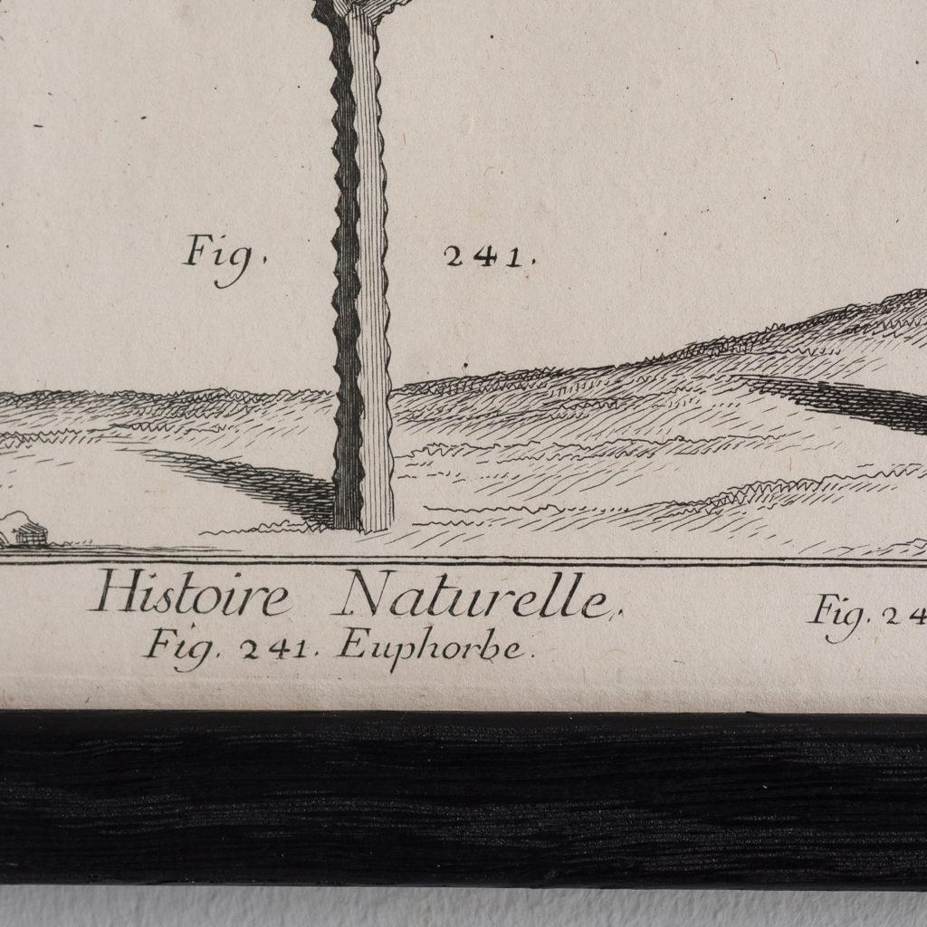 Histoire Naturelle-129177