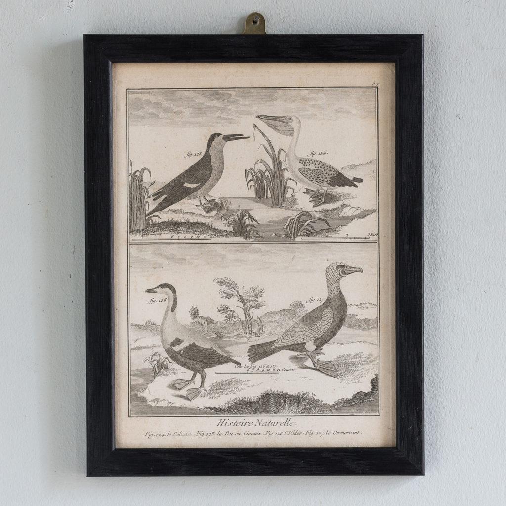 Le Pelican. Le Bec en Ciseaux. L'Eider. Le Cormorrant