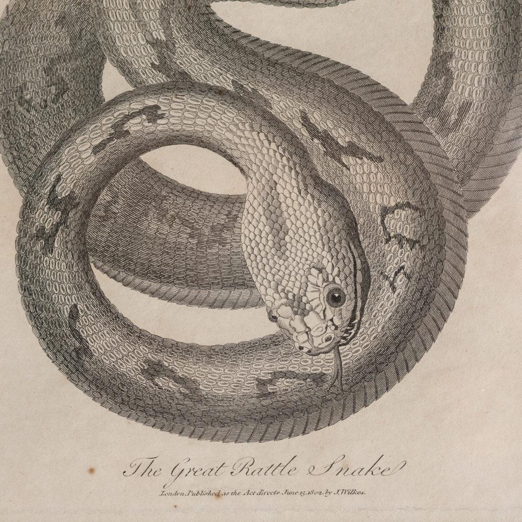 Early nineteenth century framed snake engravings-130520