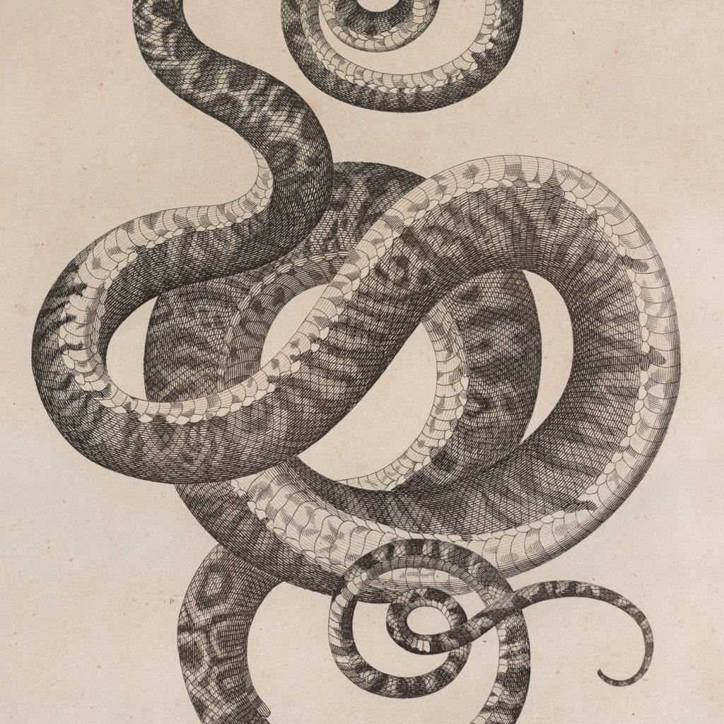 Early nineteenth century framed snake engravings-130480