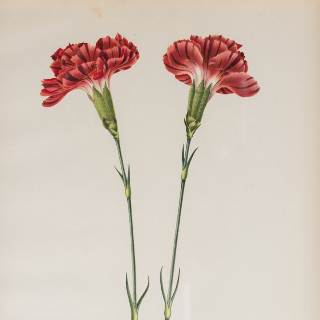 Old Flame carnations