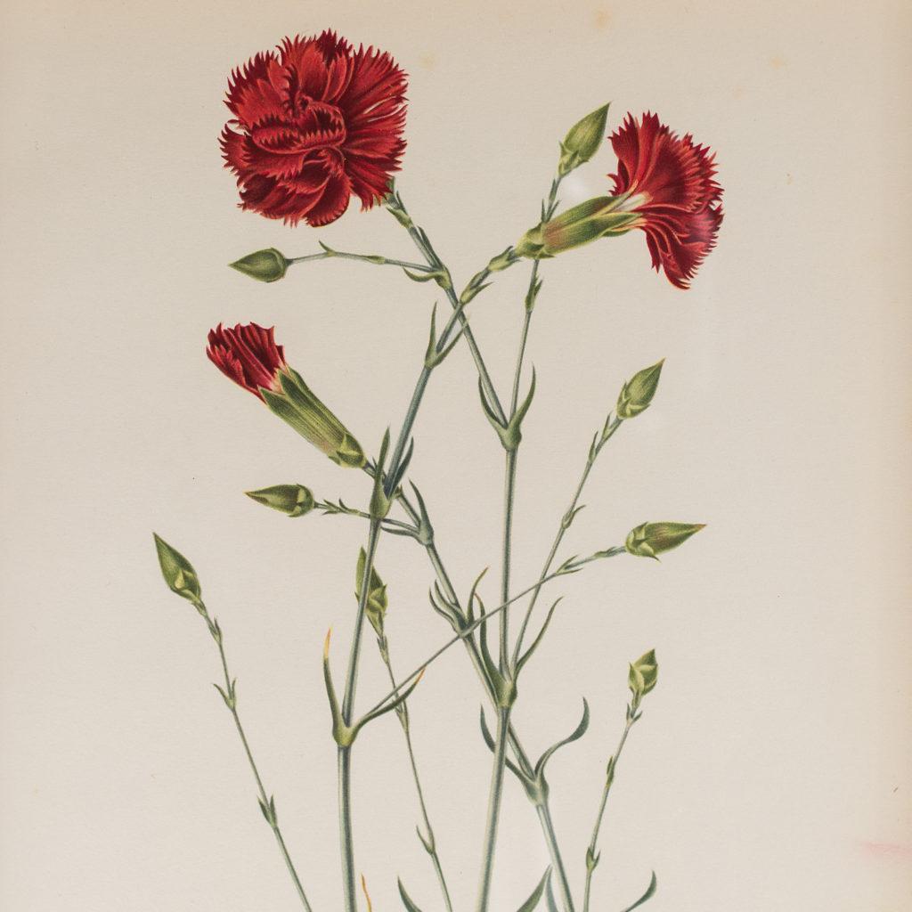 Nutmeg Clove Carnations