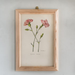 Old Carnations and Pinks Lithographs