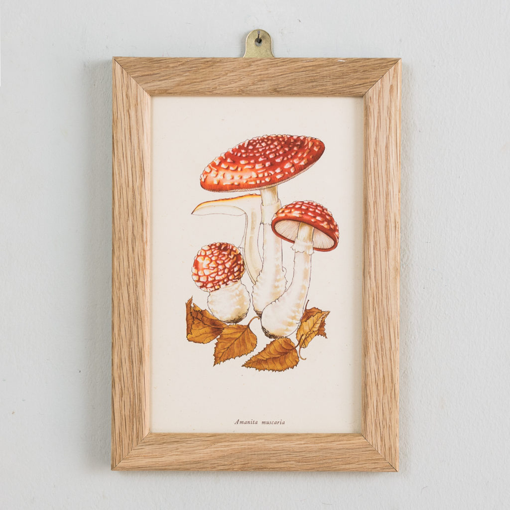 Edible and Poisonous Fungi lithographs