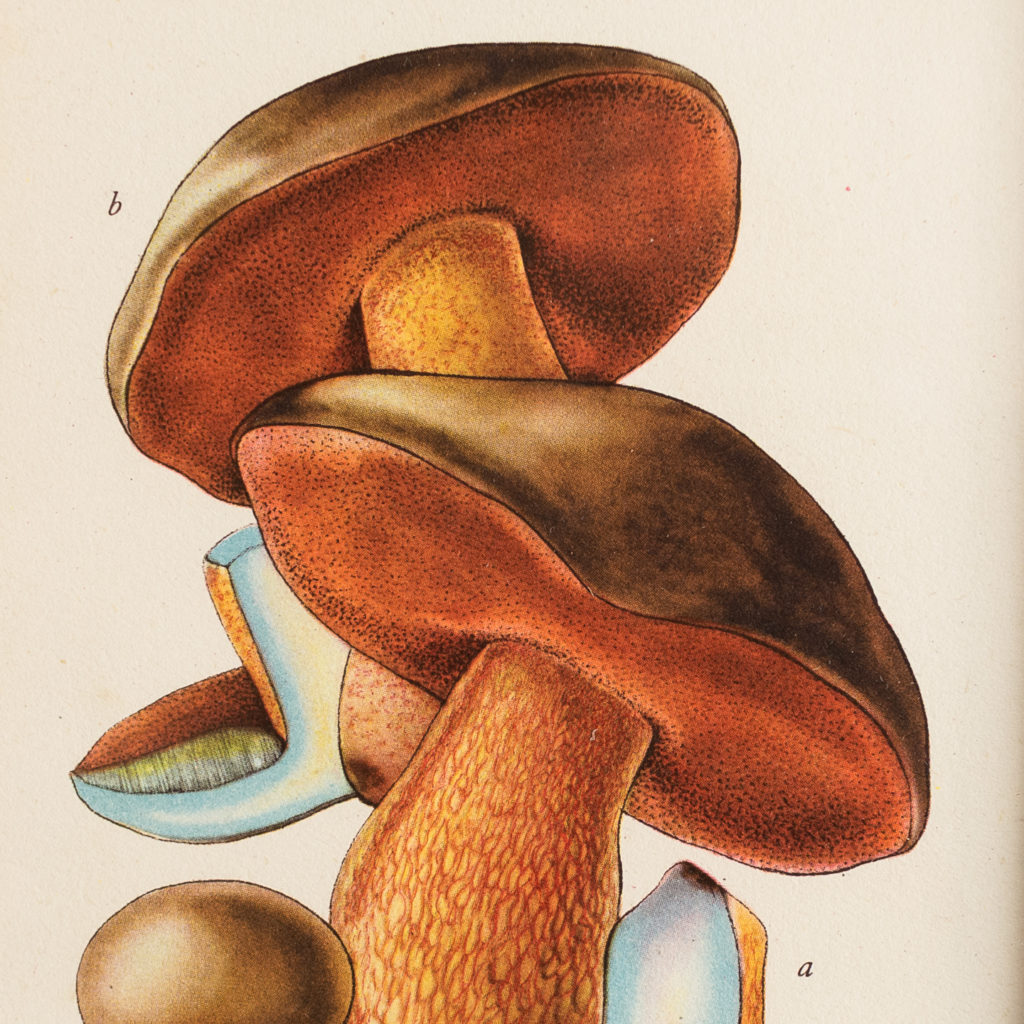 Edible and Poisonous Fungi lithographs,-133746