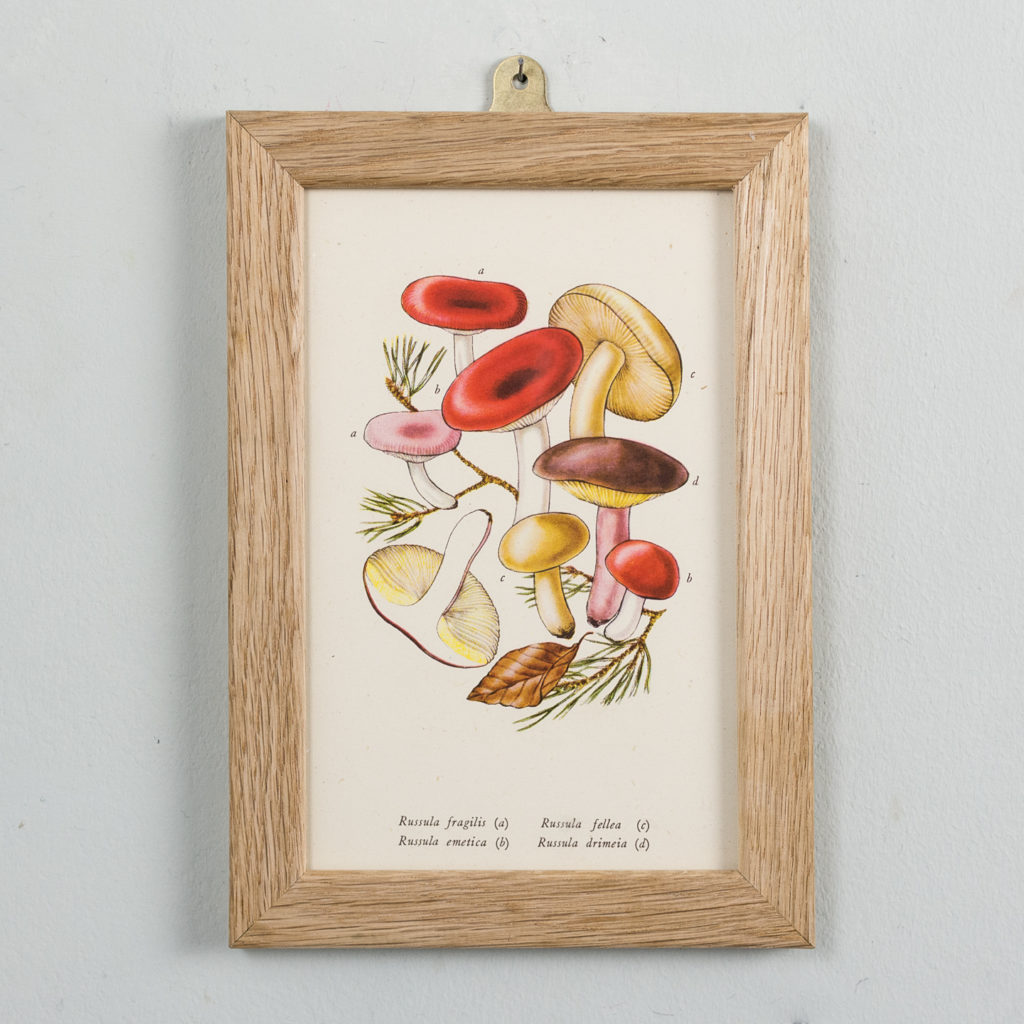Edible and Poisonous Fungi lithographs,