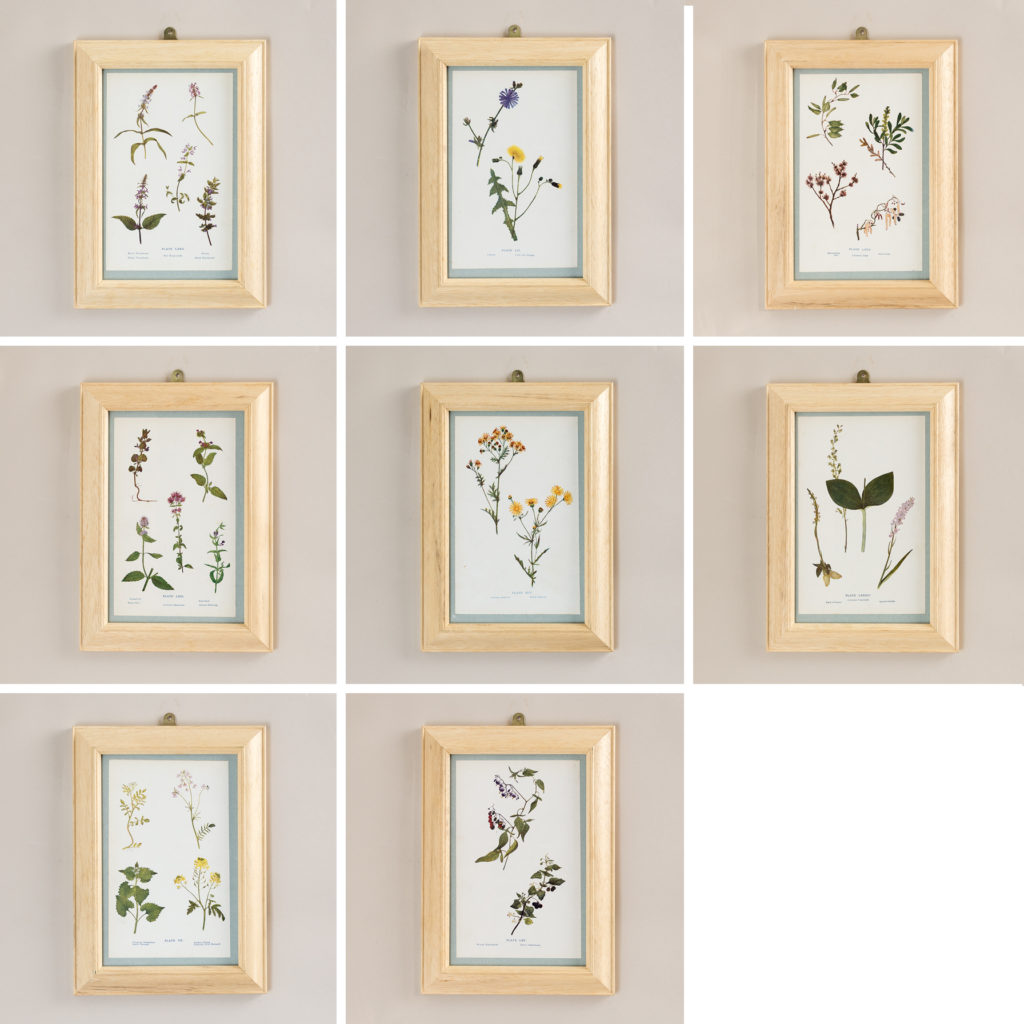 Late 19th century wild flower prints,