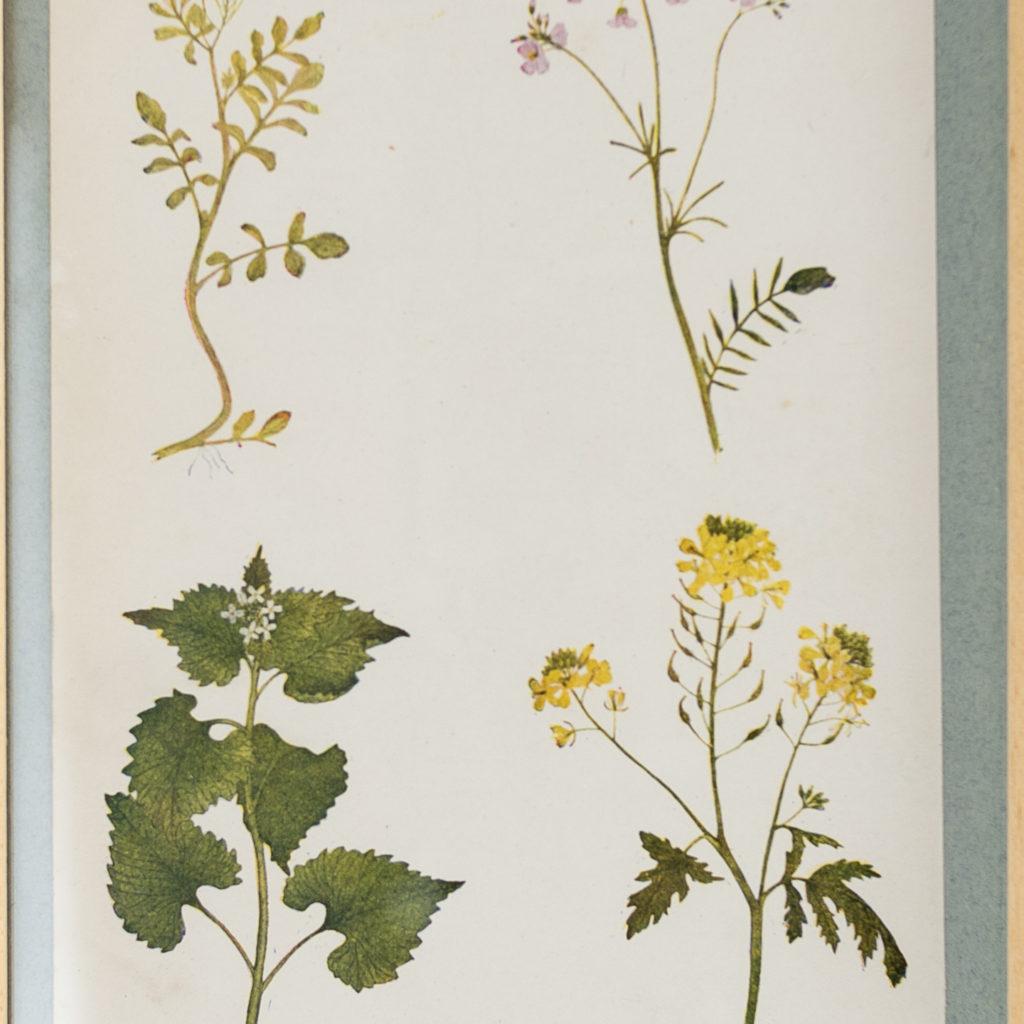Late 19th century wild flower prints, -134654