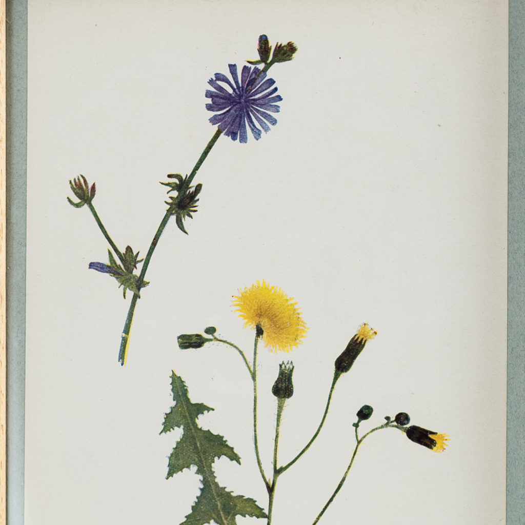 Late 19th century wild flower prints, -134645