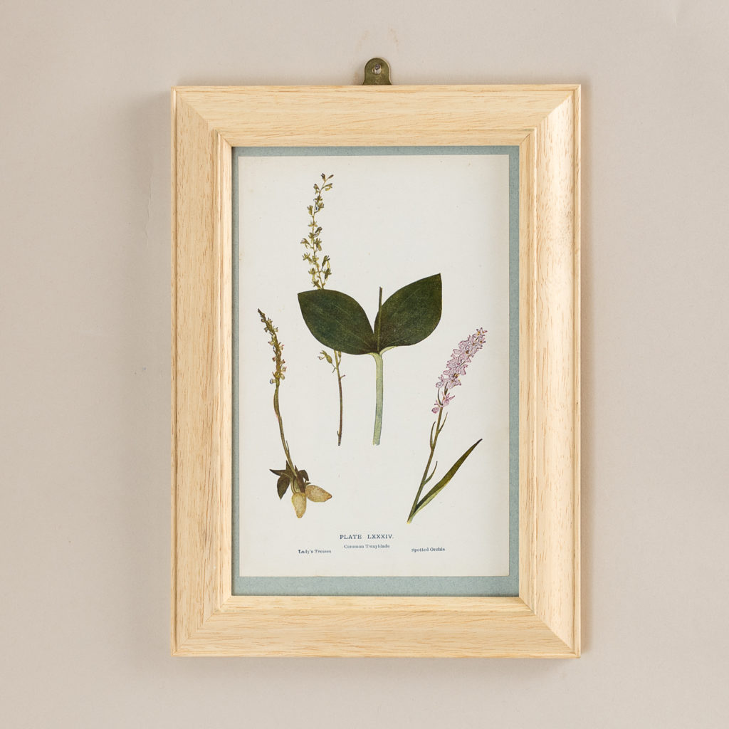 Plate 84. Lady's Tresses. Common Twayblade. Spotted Orchis'.