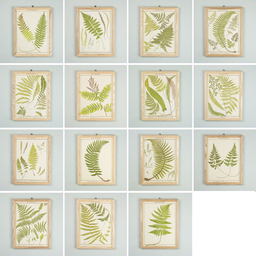 Heath's Fern Portfolio