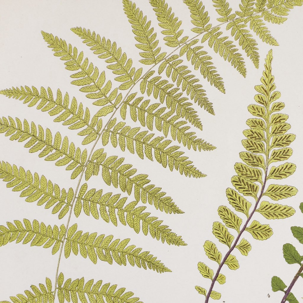 Heath's Fern Portfolio published c1885-135990