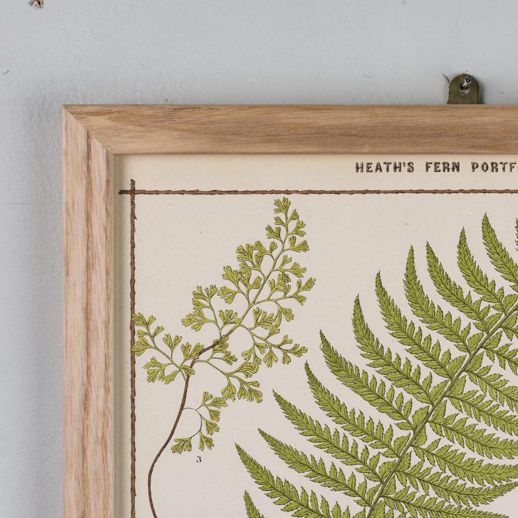 Heath's Fern Portfolio published c1885-135965