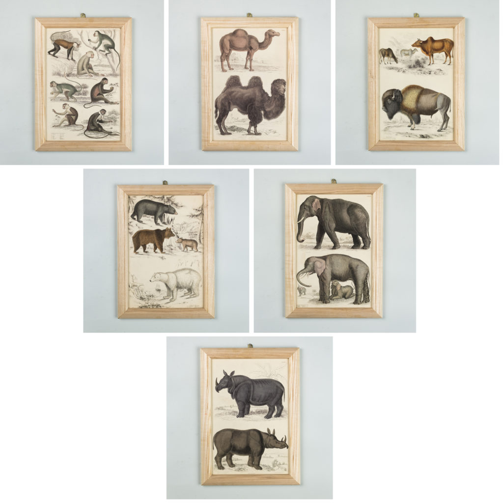 19th century engravings based on the drawings of famed naturalist; Captain Thomas Brown.