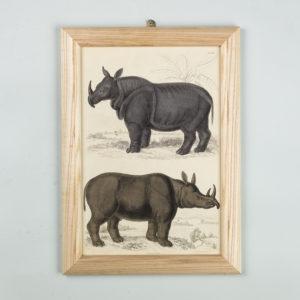 Wild animals by Captain Brown