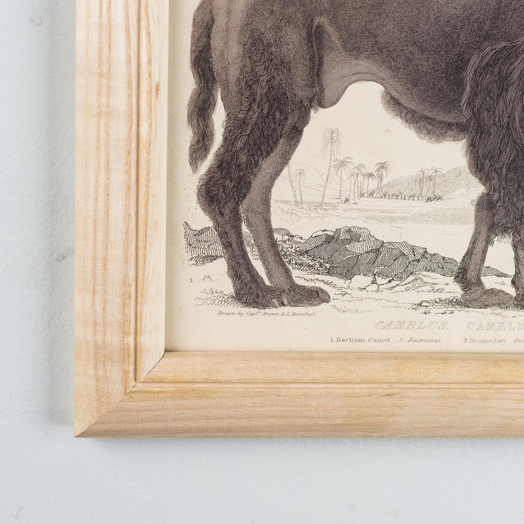 Wild Animals by Captain Brown-136038