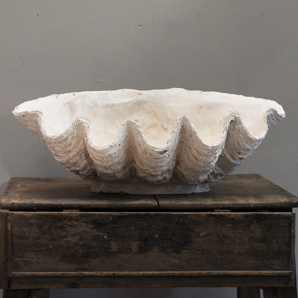 An English plaster cast of a clam shell-136749