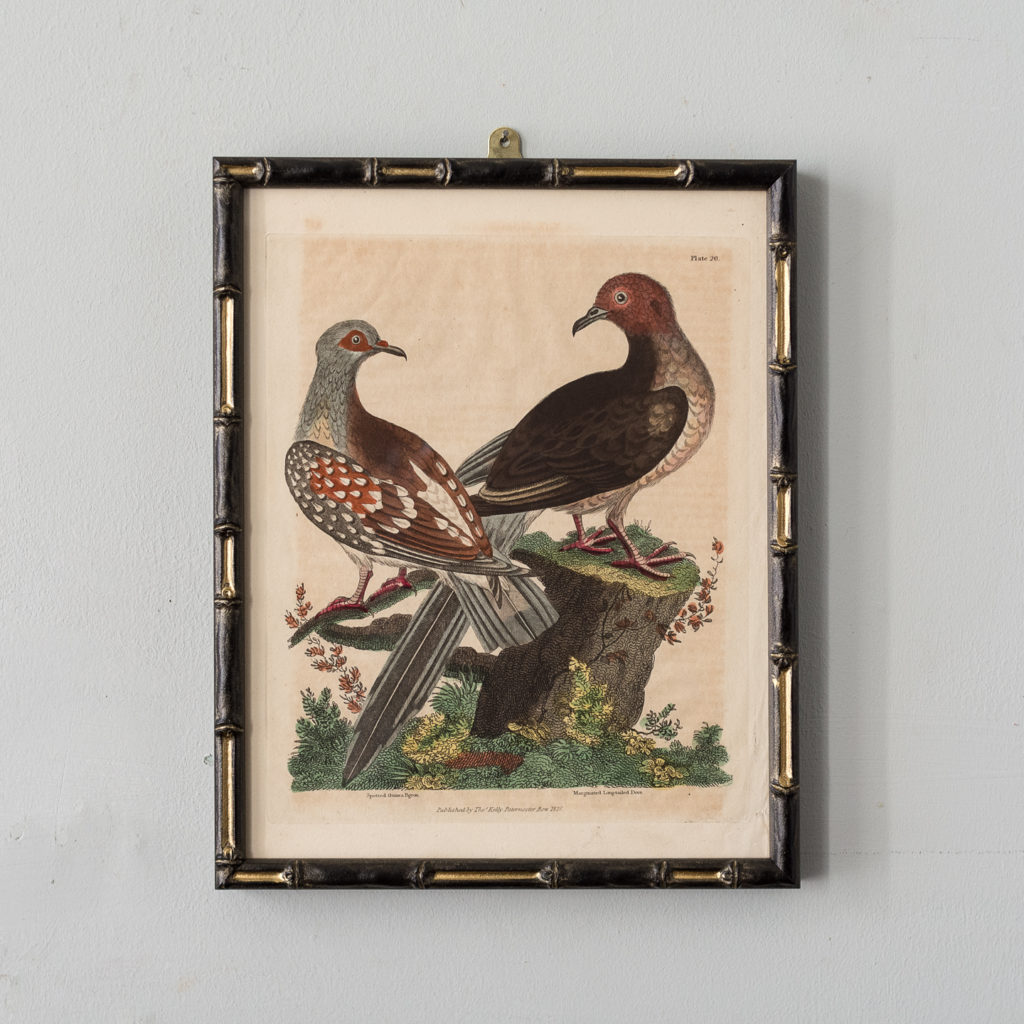 William Smellie Natural History copper-engravings,