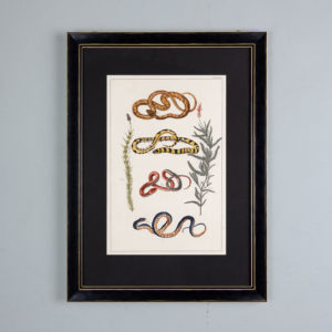 Snakes by Albertus Seba