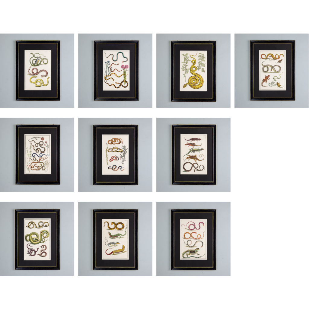 Snakes by Albertus Seba (1665-1736)-140486