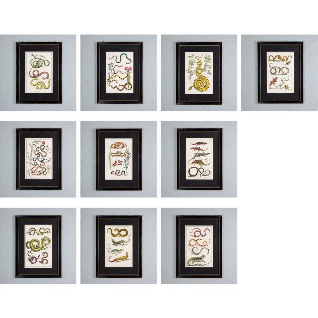 Snakes by Albertus Seba (1665-1736)-140504