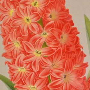 Chromolithograph floral prints by A. C. van Eeden & Co.